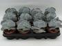 Cotyledon undulata - potmaat 8,5 cm
